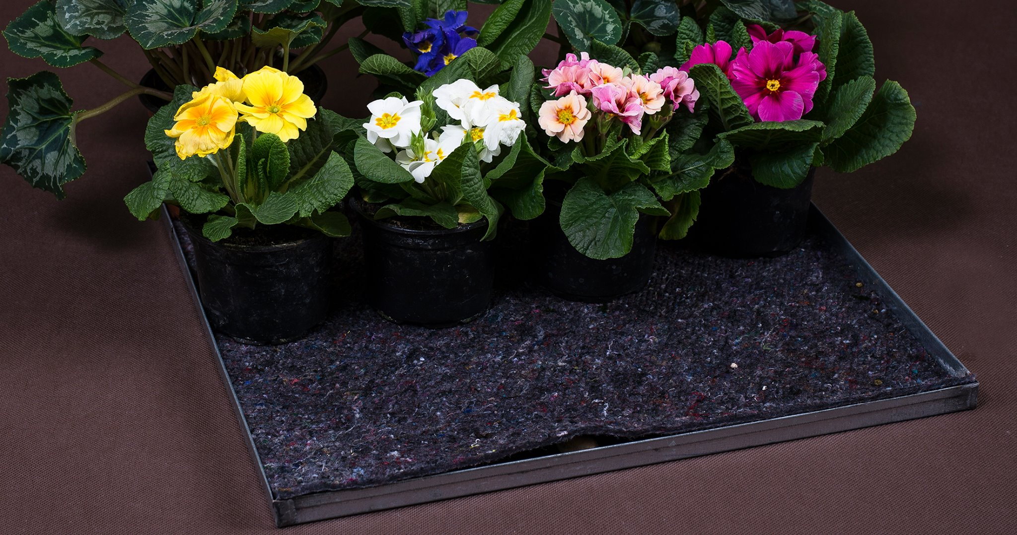 Kertészeti szivatószövetek